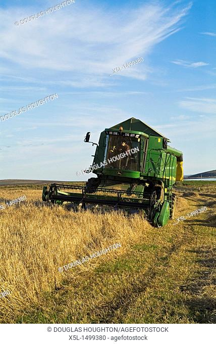HARVESTING FARMING John Deer Combine harvester cutting barley Orphir Orkney