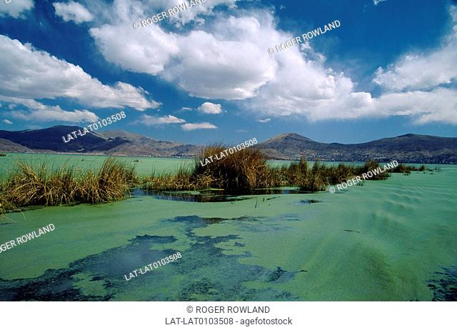 Green,algae,blue water of lake. Rushes in water. Hills. Highest lake in world