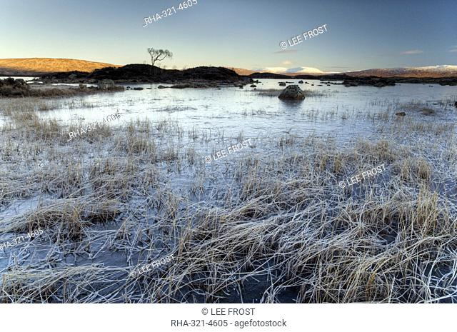 Winter view across frozen Lochain na h'Achlaise at dawn, first light catching distant mountains, foreground filled with frost-covered grass, Rannoch Moor