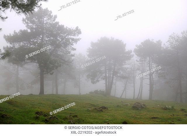 Foggy landscape, Basque Country, Spain