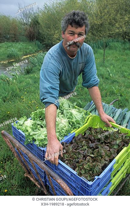 Market gardening producer in organic farming, Hortillonnages, Amiens, Somme department, Picardy region, France, Europe