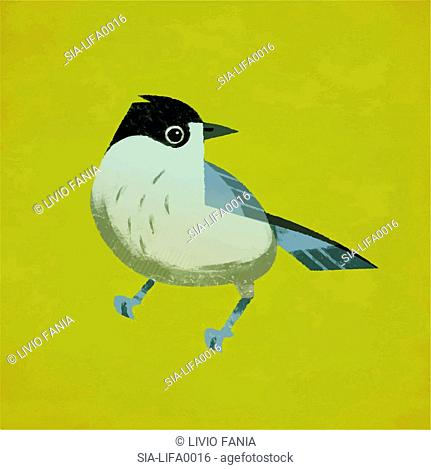 Small bird against yellow background