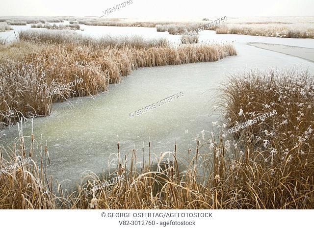 Visitor Center pond with ice, Bear River Migratory Bird Refuge, Utah