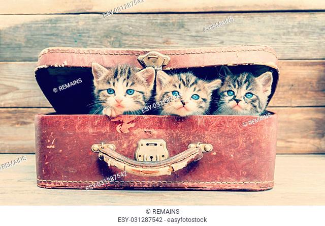 Cute kittens are sitting in vintage suitcase on a wooden background