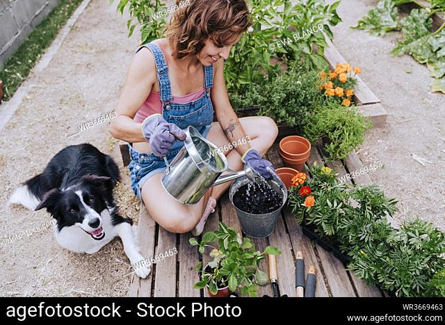 Woman watering plant while sitting with border collie at vegetable garden