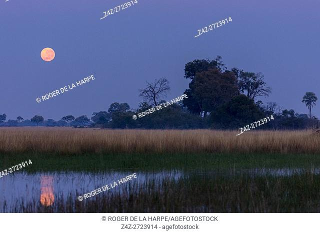 Moonset. Okavango Delta. Botswana