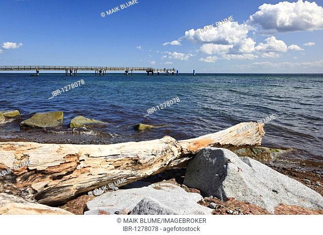 Washed up log in Sassnitz, Ruegen Island, Mecklenburg-Western Pomerania, Germany, Europe