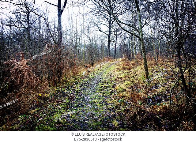 Trail with trees in a forest in autumn. Grass Wood, Grassington, Skipton, Yorkshire Dales, North Yorkshire UK