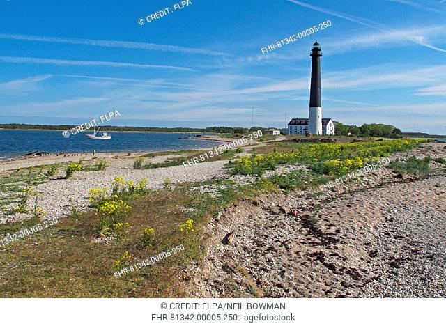 View of coastal peninsula and lighthouse, Sorve Peninsula, Saaremaa Island, Saare County, Estonia, June