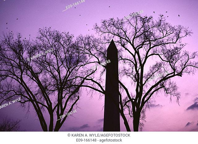 Washington Monument at dusk with subdued pastel sunset colors in sky, monument silhouetted and flanked by silhouetted trees, birds in sky