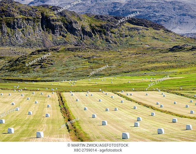 Agriculture and sheep farming near Itilleq in South Greenland at the shore of Eriksfjord. America, North America, Greenland, Denmark