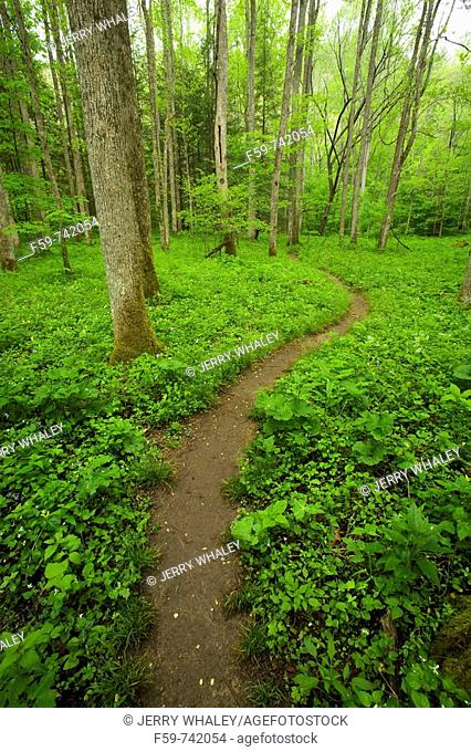 Spring, Whiteoak Sink, Great Smoky Mountains National Park, TN, USA