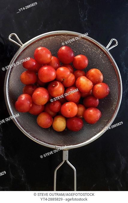 Fresh Plums in a Colander