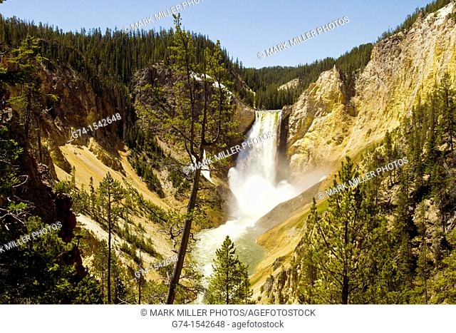 Lower Falls Yellowstone River Yellowstone National Park Wyoming USA