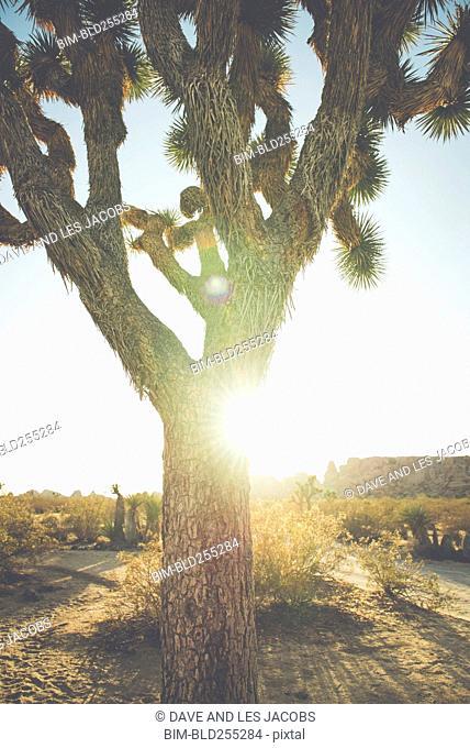 Tree in sunny desert