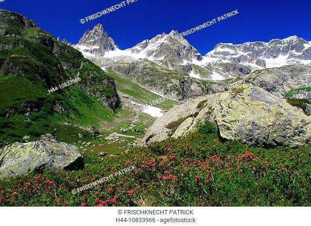 Switzerland, Europe, Canton Uri, Funffingerstock, Wendenhorn and Wasenhorn, Alpine rose, Rostblattrige Alpenrose, Rhod