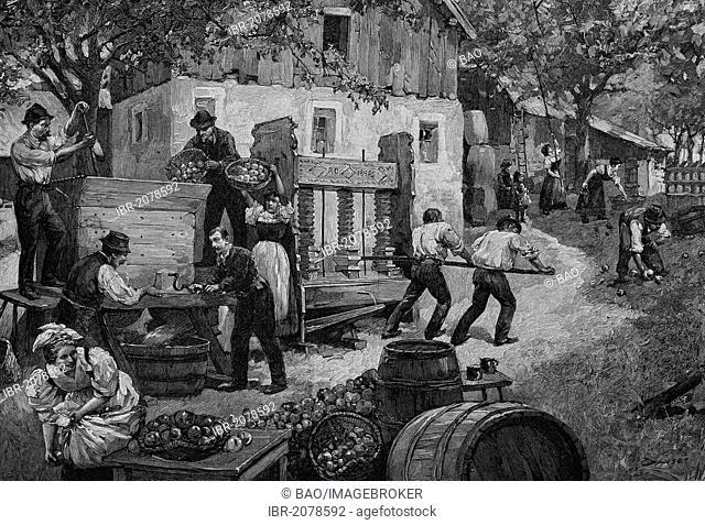 Must press in Upper Austria, Austria, woodcut, historical engraving, 1882