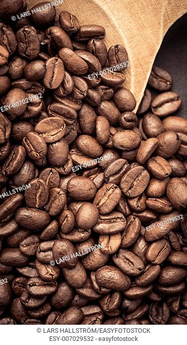 Closeup of dark roasted coffee beans on a rustic old wooden spoon used as a scoop. Food and drink backdrop showing aromatic and beautiful coffee beans