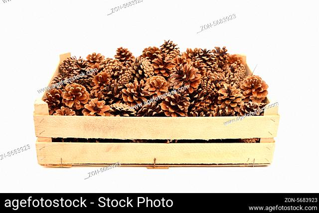 Pine cones in the wooden box. White background