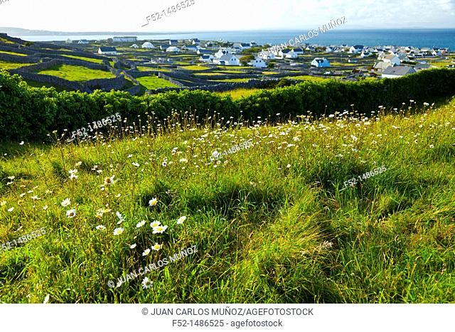 Baile An Lurgain Village  Inisheer Island - Inis Oirr  Aran Islands, Galway County, West Ireland, Europe