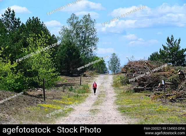 17 May 2020, Brandenburg, Luckenwalde: Wood piles on the way to the approximately nine-hectare inland dune in the wilderness area of the Brandenburg Natural...