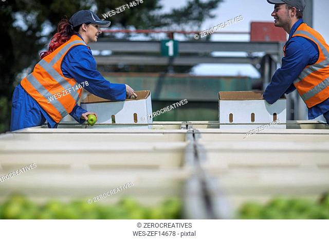 Workers in reflective vests packing apples