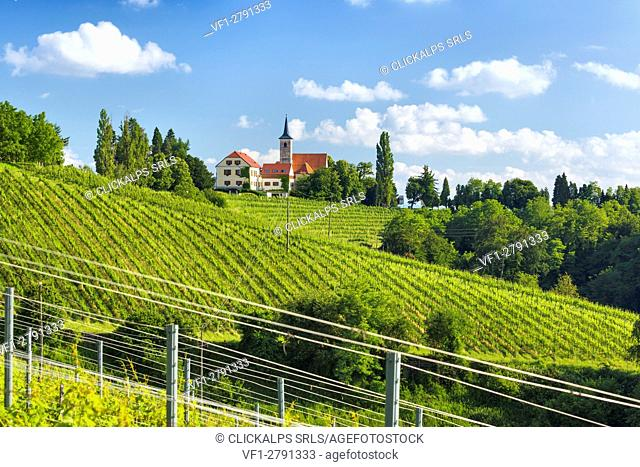 Europe, Slovenia. Vineyard below the hilltop church of Jeruzalem near Ljutomer