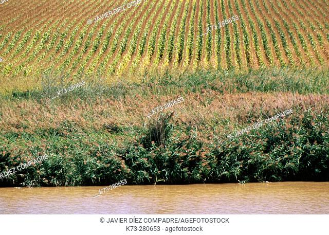 Reservoir of San Jose. Castronuño. Valladolid province. Castilla y Leon. Spain