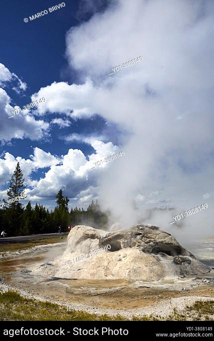 Grotto Geyser In the Yellowstone National Park. Wyoming. USA