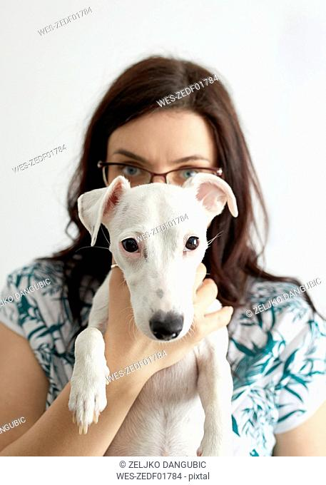 Portrait of white dog with owner in the background
