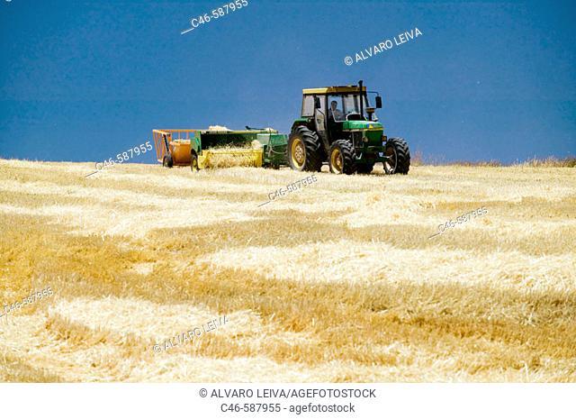 Harvesting of cereals
