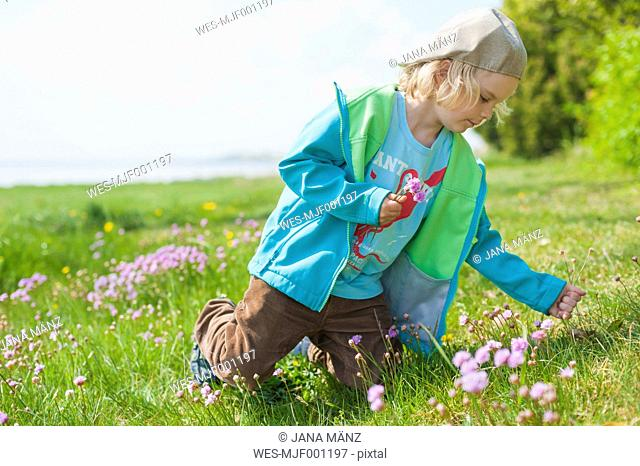 Germany, Mecklenburg-Western Pomerania, Ruegen, Boy picking flowers from meadow