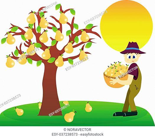 Illustration of a farmer harvesting pears