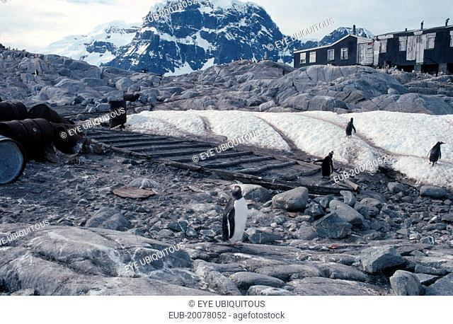 Port Lockroy. British Base abandoned in 1964 with penguins in the foreground