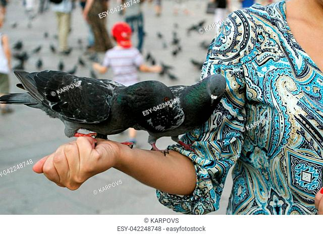 Summer. Italy. Venice. Piazza San Marco. The dove sits on the girl's hand in a blue dress