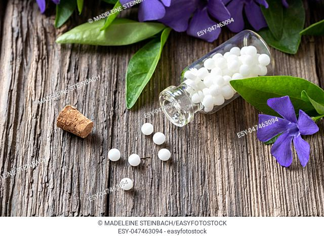 A bottle of homeopathic pills with fresh vinca minor plant