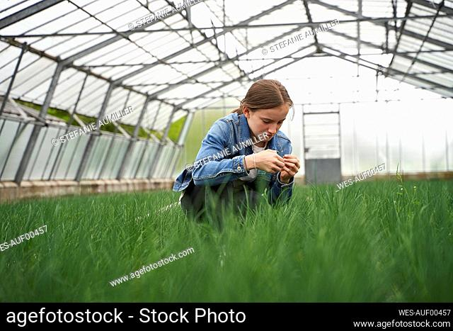 Girl crouching in greenhouse, examining chives