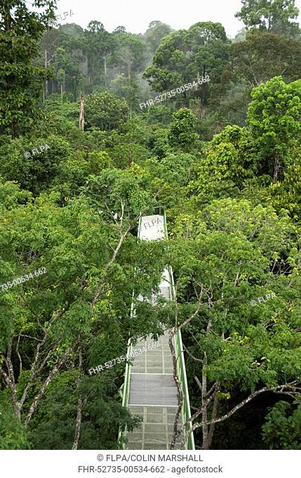 Canopy walkway through trees, Rainforest Discovery Centre, Sepilok N P , Sabah, Borneo, Malaysia