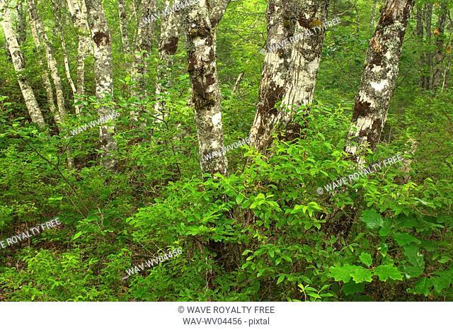 Forest floor details - Port L'Hebert Pocket Wilderness Park, Nova Scotia