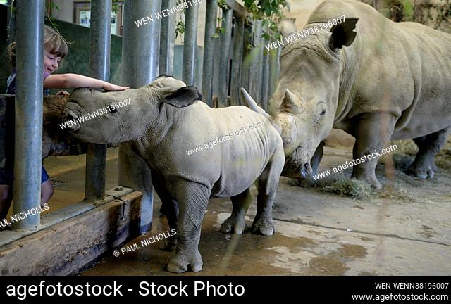 Molly the 4-week-old Molly baby Rhino, who has been named Molly after Cotswold Wildlife Park Head Keeper Mark Godwin's daughter Molly Godwin, 4yrs