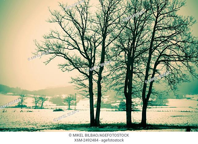 Country with trees in winter. Bitoriano. Alava, Basque Country, Spain, Europe