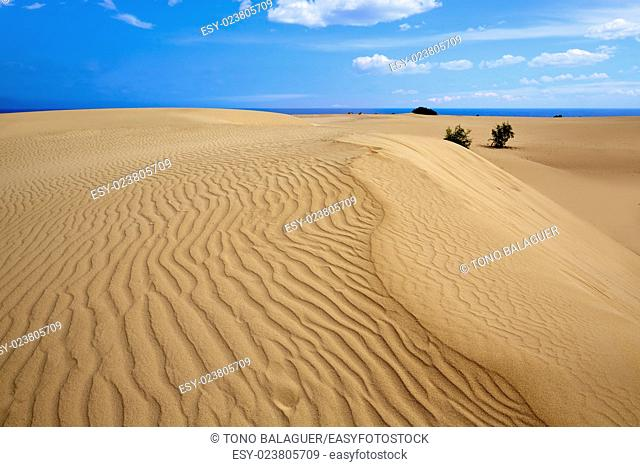 Corralejo dunes Fuerteventura desert at Canary Islands of Spain