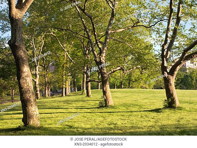 Trees, Central Park, Manhattan, New York City, New York, USA
