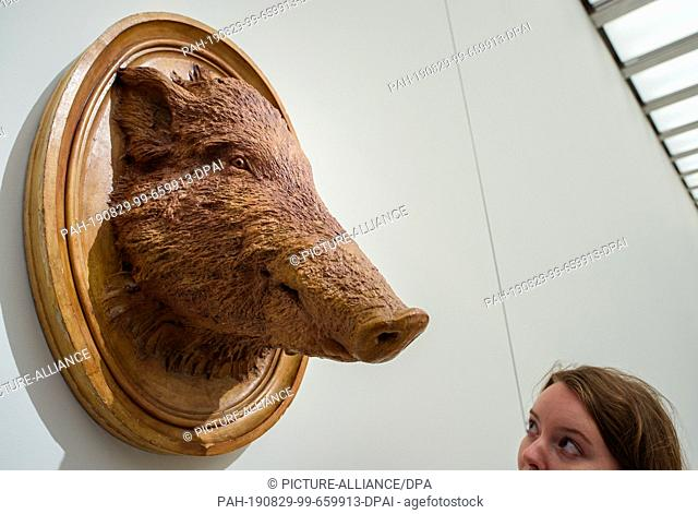 """29 August 2019, Berlin: A woman looks at the plaster cast """"""""Head of a Boar"""""""" in the exhibition """"""""Nah am Leben. 200 Years of Gipsformerei"""""""" in the James Simon..."""