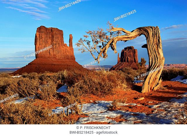 stone monolith Mitten Buttes and gnarled tree, USA, Utah, Monument Valley National Park