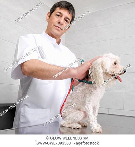 Vet examining a dog on an examination table