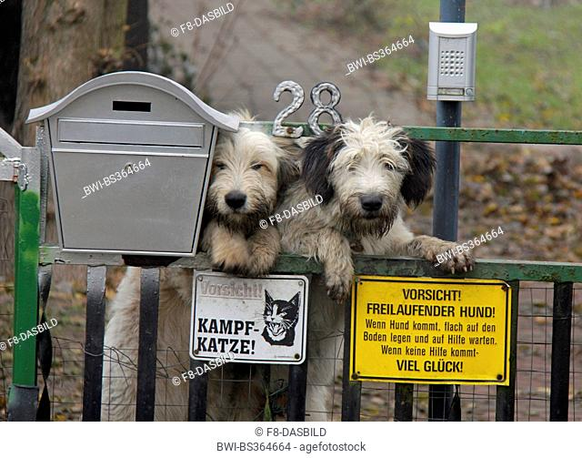 mixed breed dog (Canis lupus f. familiaris), watchdog at a gate with mail box and warning sign, Germany, Brandenburg
