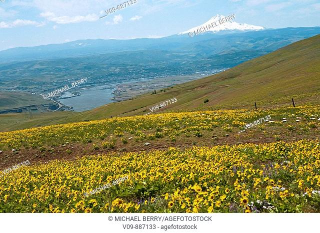 Wildflowers and Mt. Hood