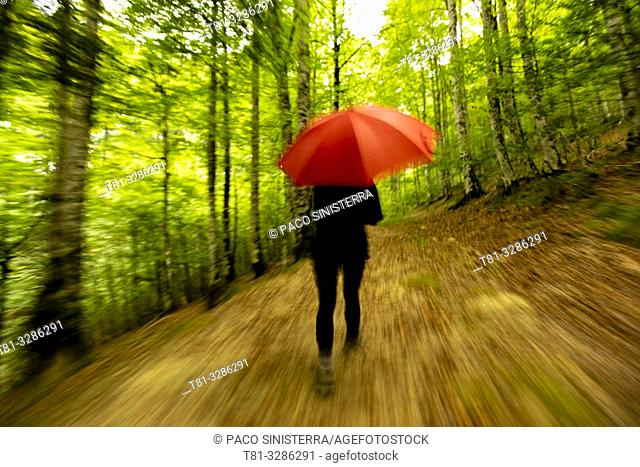 Young woman walking through forest with red umbrella. Selva de Irati, Navarre, Spain