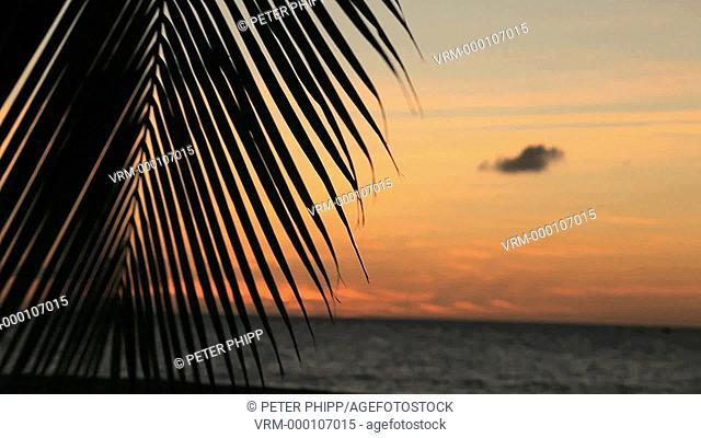 Palm leaf silhoutte against sea at dusk